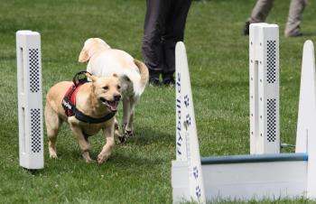 Hundesport Flying Dragons: Hunde auf dem Parcours. (Foto: Privat)