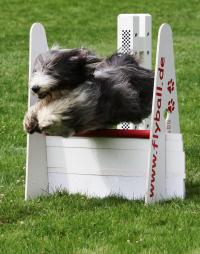 Hundesport Flying Dragons: Hund im Sprung. (Foto: Privat)